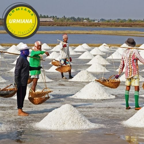 what is the sea salt