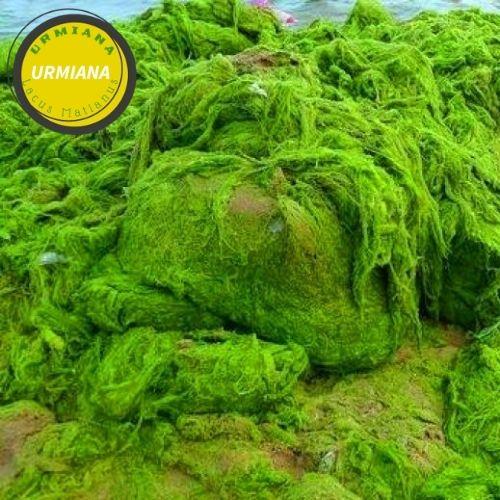 Types of algae
