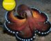 The most beautiful sea animals